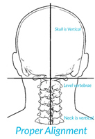 Upper Cervical Aligned Neck